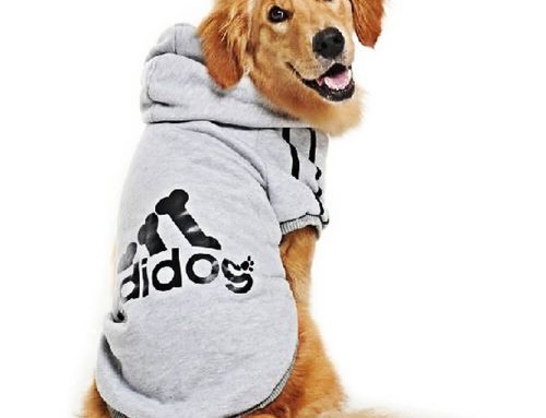 The Best Dog Sweaters and Shirts for Larger Dogs