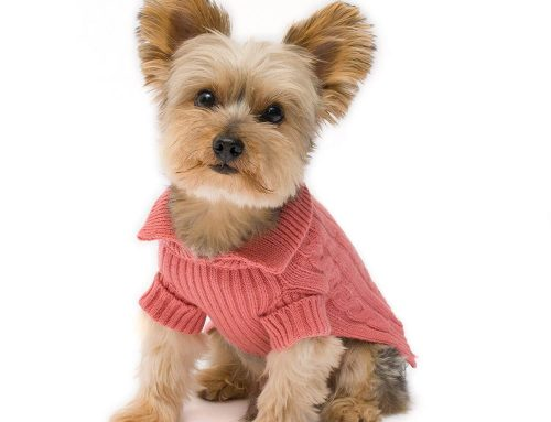 The Best Dog Sweaters and Shirts for Smaller Dogs